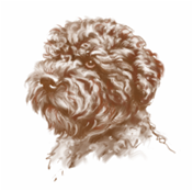 FRED'S HEAD illustration