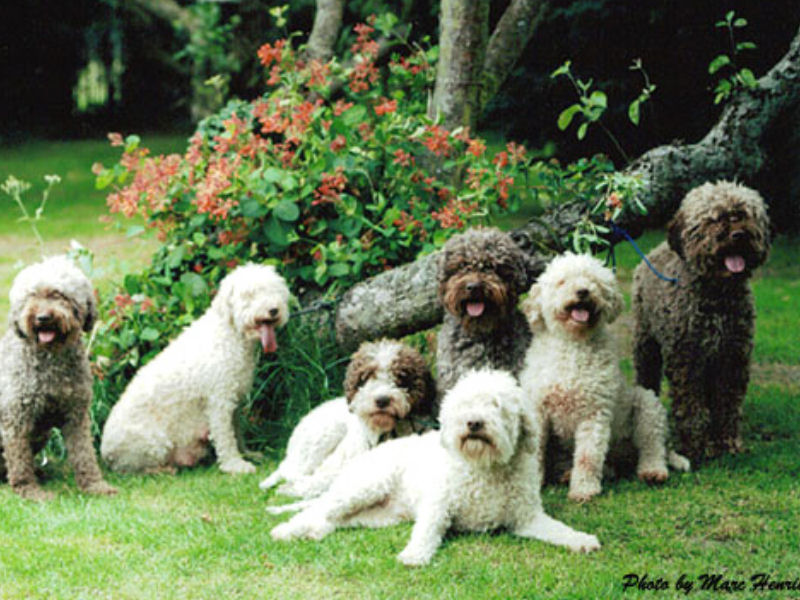 HISTORY IN THE UK 7 dogs