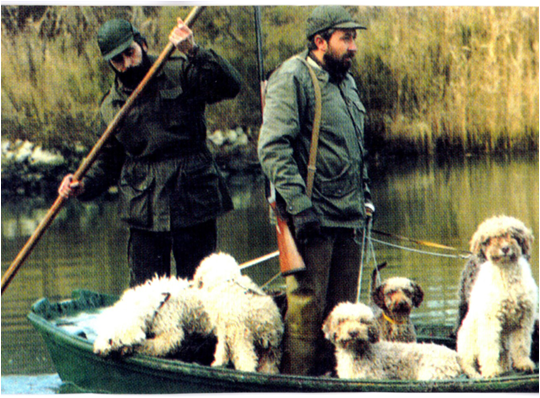 HISTORY OF THE LAGOTTO IN THE UK Punt