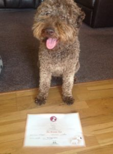 Luca with his Bronze Kennel Club Good Citizen award