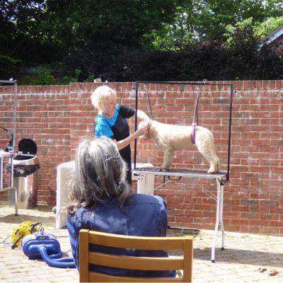 EVENT grooming demo 800x800